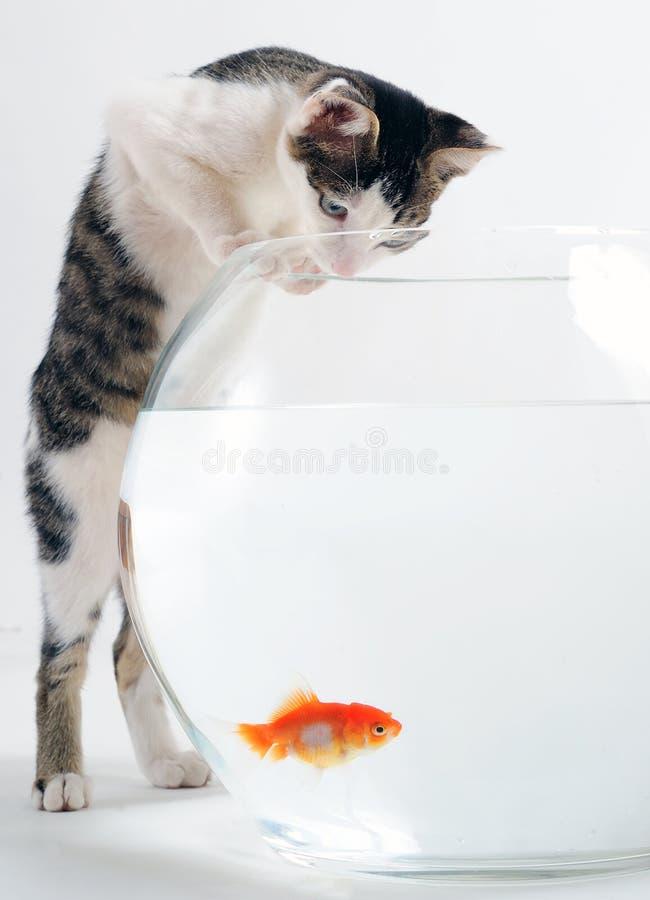 Katje en goudvis stock afbeelding