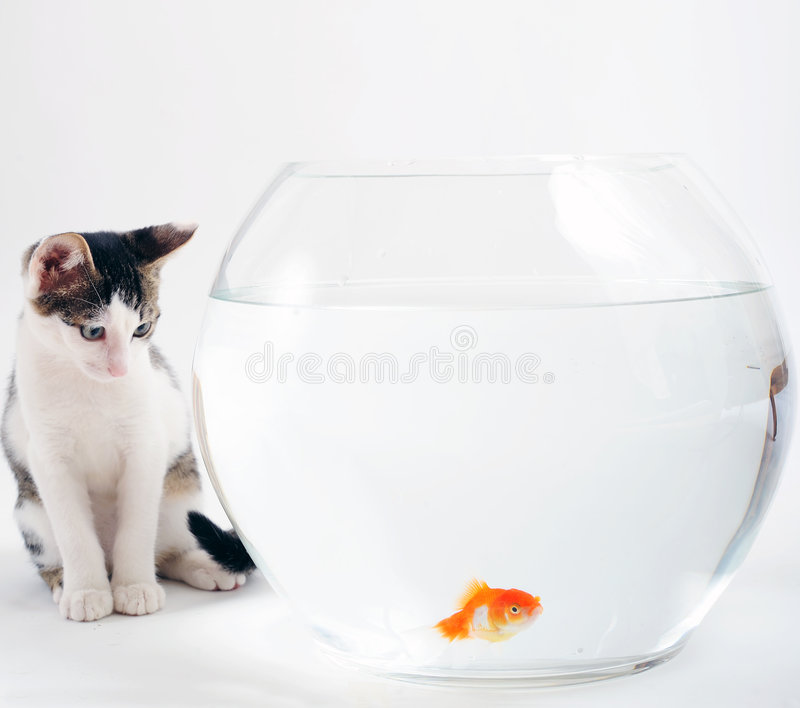 Katje en goudvis stock fotografie