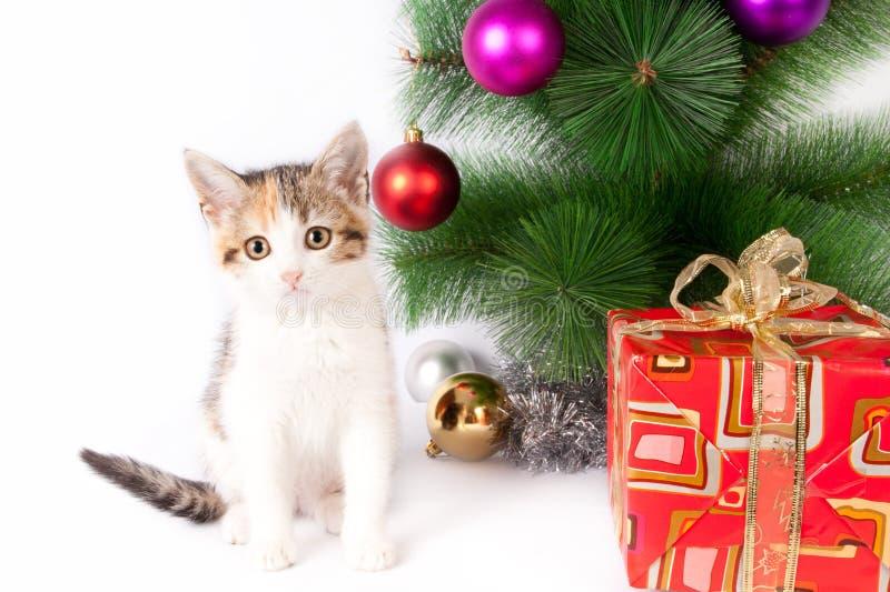 Katje en Kerstmisdecoratie royalty-vrije stock afbeeldingen