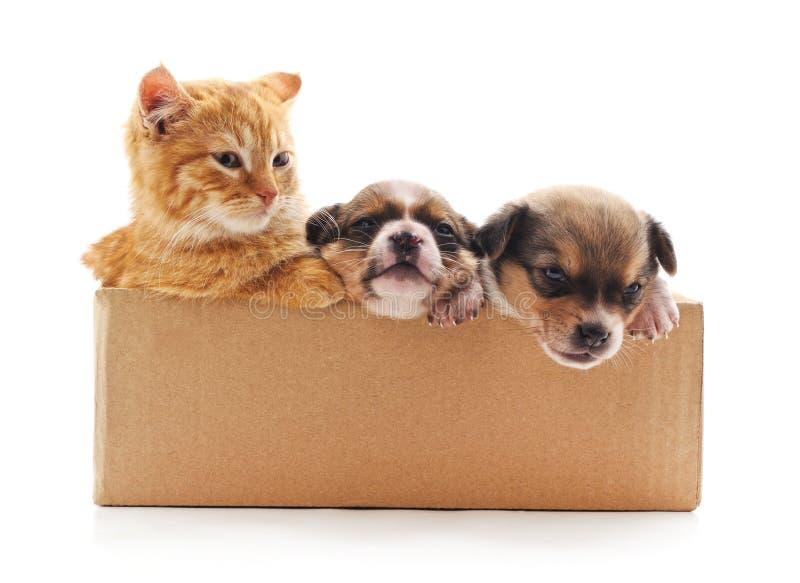 Katje en puppy in de doos royalty-vrije stock fotografie