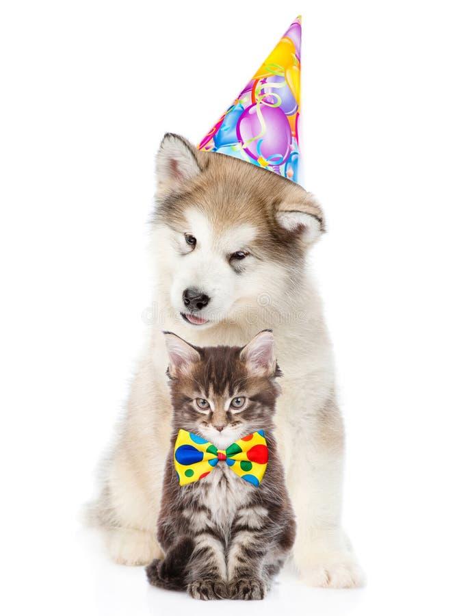 Katje en puppy in verjaardagshoed die camera samen bekijken Geïsoleerde royalty-vrije stock foto