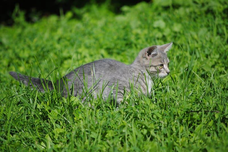 Katje in het gras royalty-vrije stock fotografie