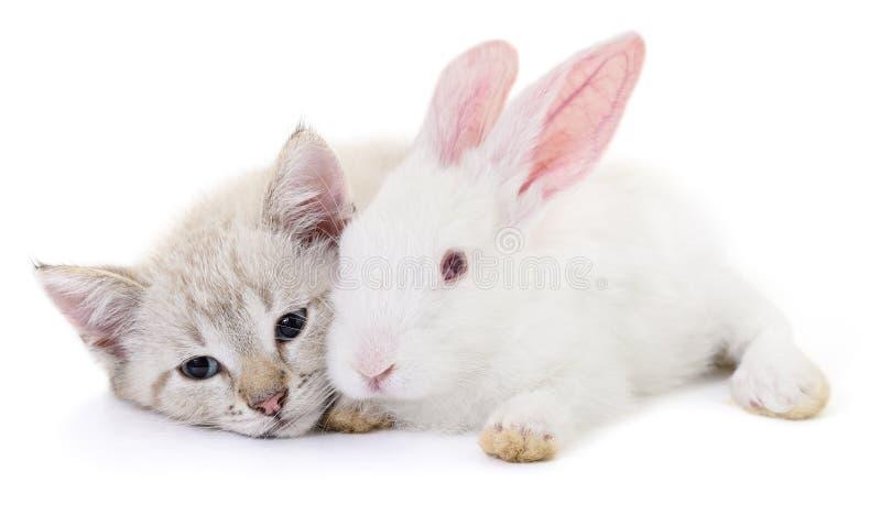 Katje het spelen met konijn stock foto