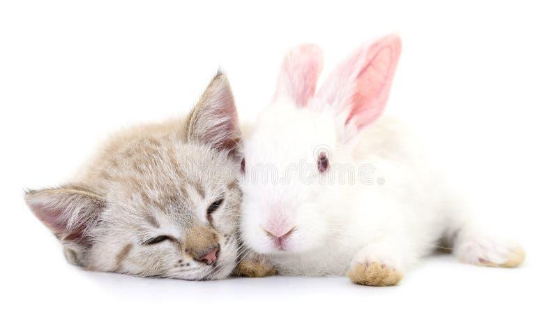 Katje het spelen met konijn royalty-vrije stock afbeeldingen
