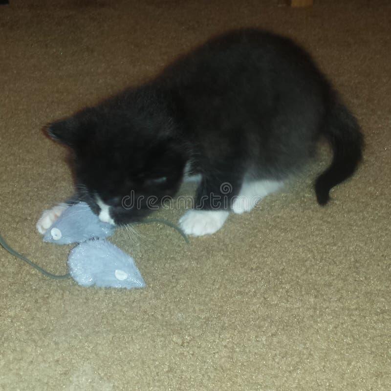 Katje het spelen met muis stock foto
