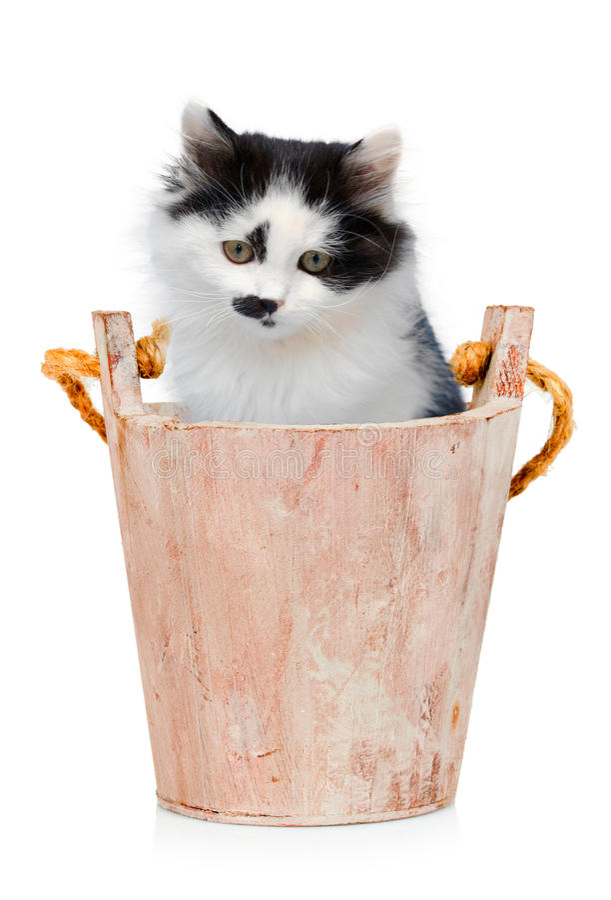 Katje in houten emmer op witte achtergrond stock fotografie