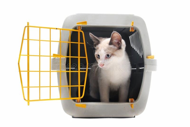 Katje in huisdierencarrier royalty-vrije stock afbeeldingen