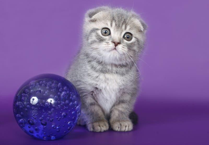 Katje met een glasbal. stock foto's