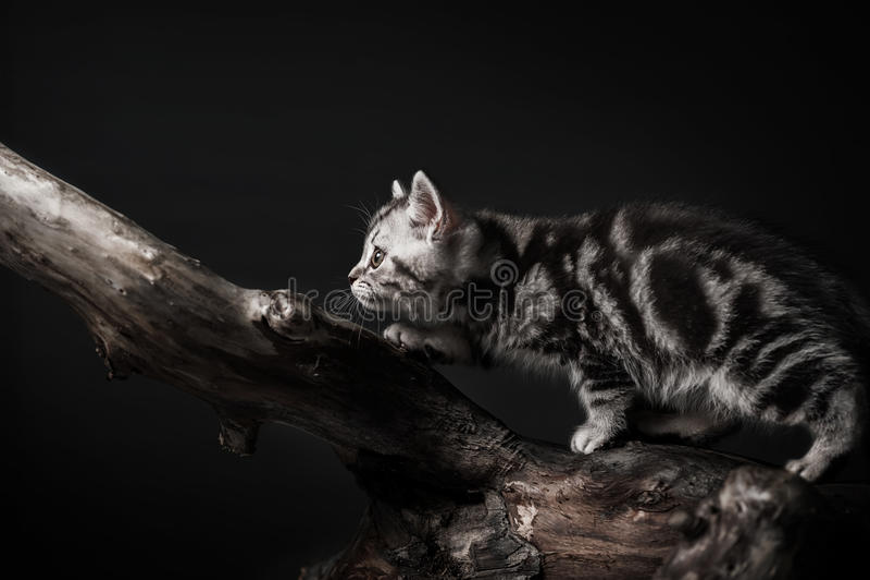 Katje op drijfhout royalty-vrije stock fotografie