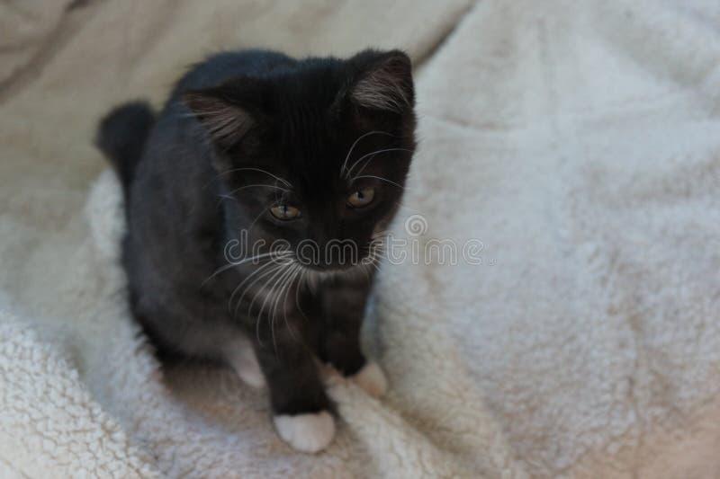 Katje op een deken stock foto's