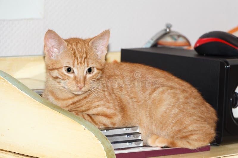 Katje op een meubilair stock foto