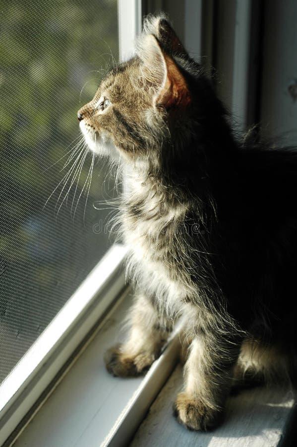 Katje in Venster royalty-vrije stock afbeelding