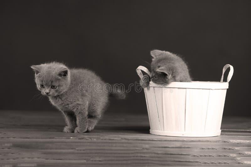 Katjes die in mand spelen stock afbeelding