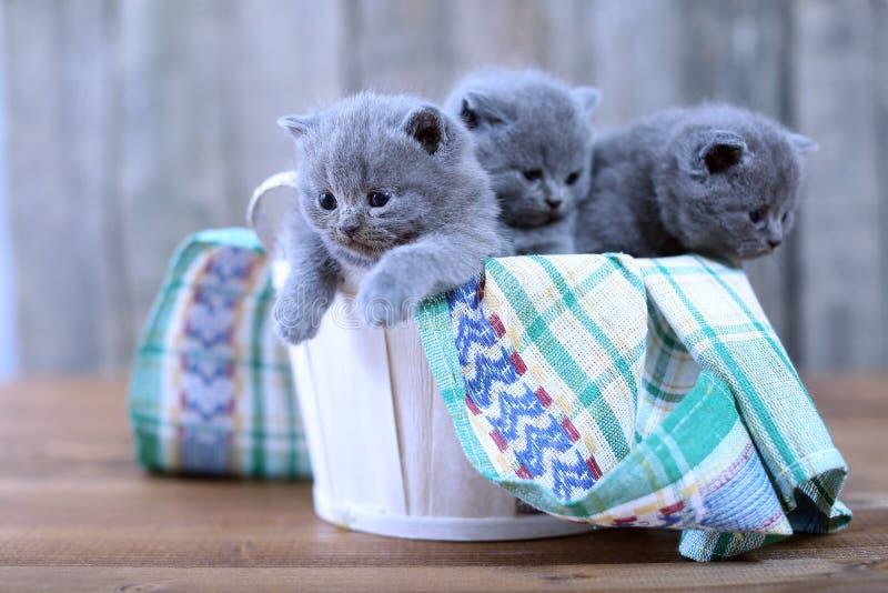Katjes in een mand stock foto