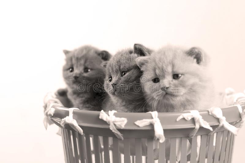 Katjes in kleine mand, close-upmening royalty-vrije stock fotografie