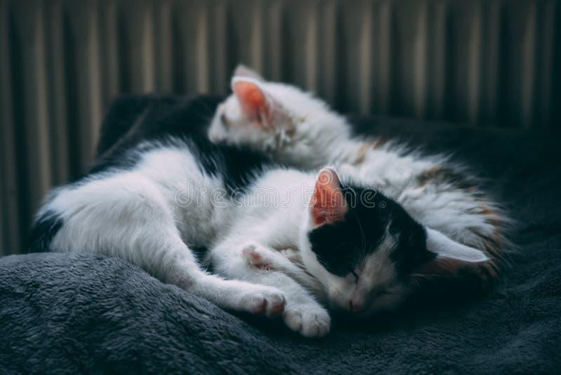 Katjessiblings die naast elkaar slapen stock foto's