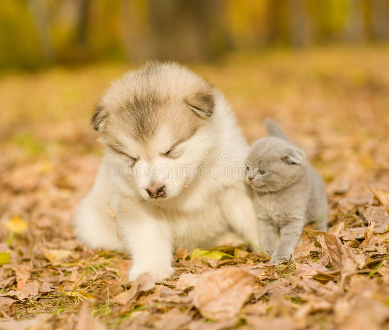 Katjeszitting dichtbij een slaperig puppy royalty-vrije stock afbeelding