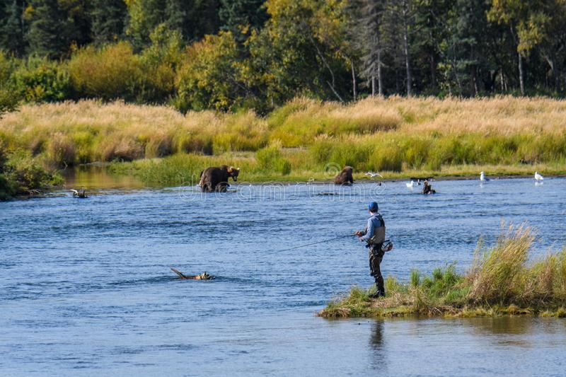KATMAI NATIONAL PARK, AK. – SEPTEMBER 16, 2019: Fisherman on the Brooks River keeping an eye on brown bears also fishing in the river stock image