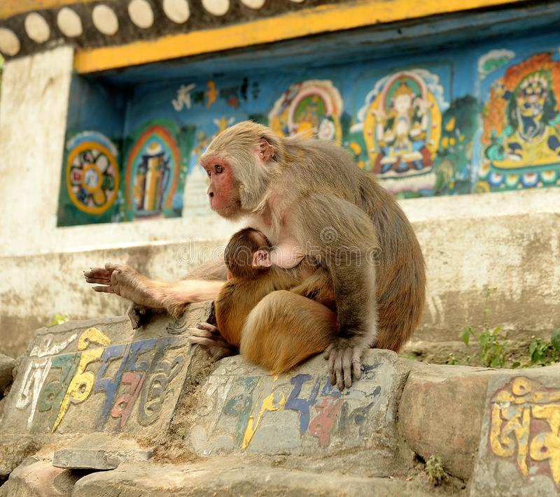 Katmandu tempelapor royaltyfri fotografi