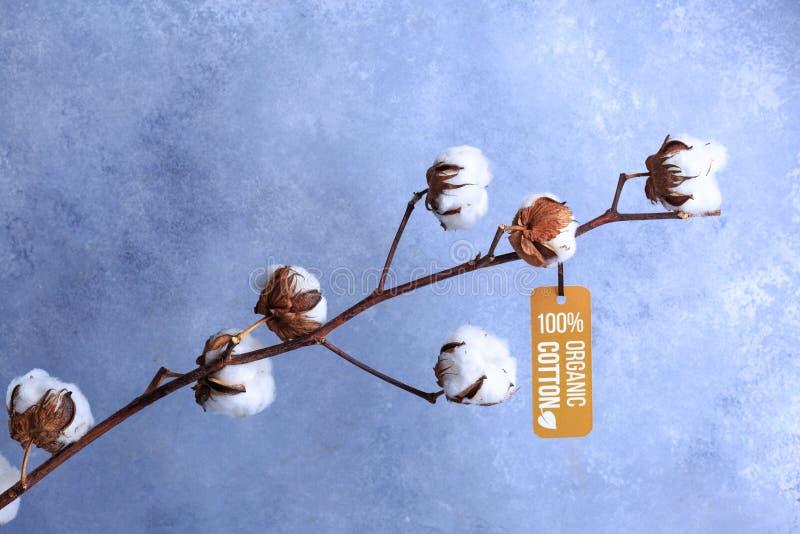 Katoen bloemen met een label met organisch concept op grijs royalty-vrije stock afbeelding