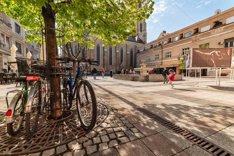 Katolsk domkyrka namnet av den Mary Church och Katolicka Porta fyrkanten i Novi Sad i mitten av Novi Sad royaltyfri fotografi