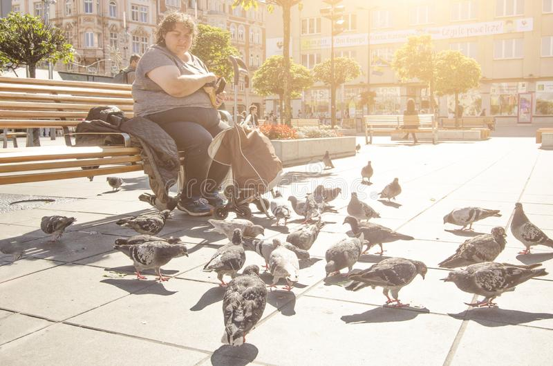 A middle-aged woman feeding pigeons in the street of Katowice stock photography