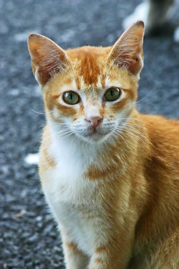 Download Katt arkivfoto. Bild av angus, färger, calico, husdjur - 276332
