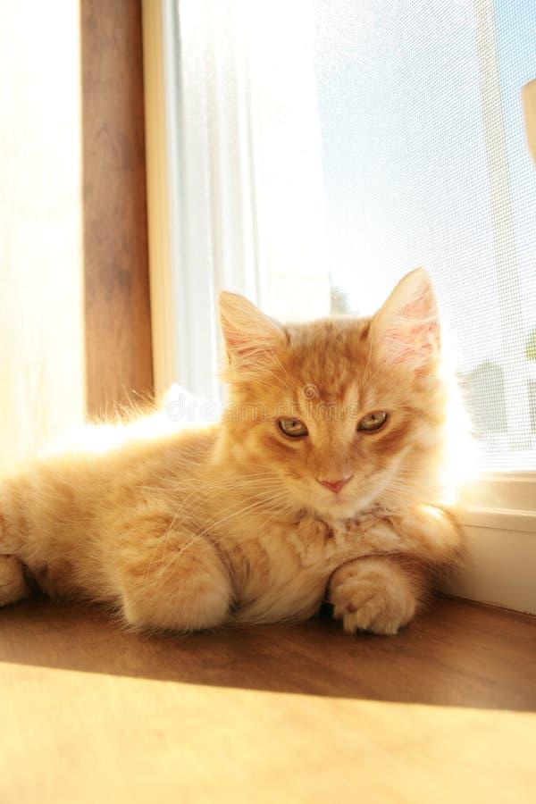 Download Katt arkivfoto. Bild av päls, vila, watch, utgångspunkt - 3535234