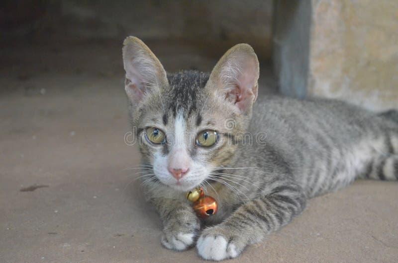 Katt, arkivbilder