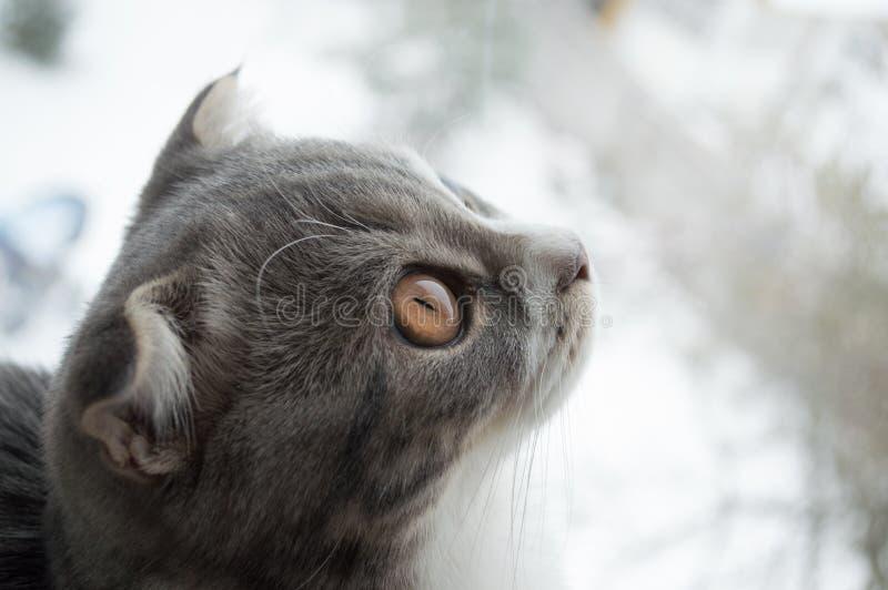 Katt royaltyfria foton