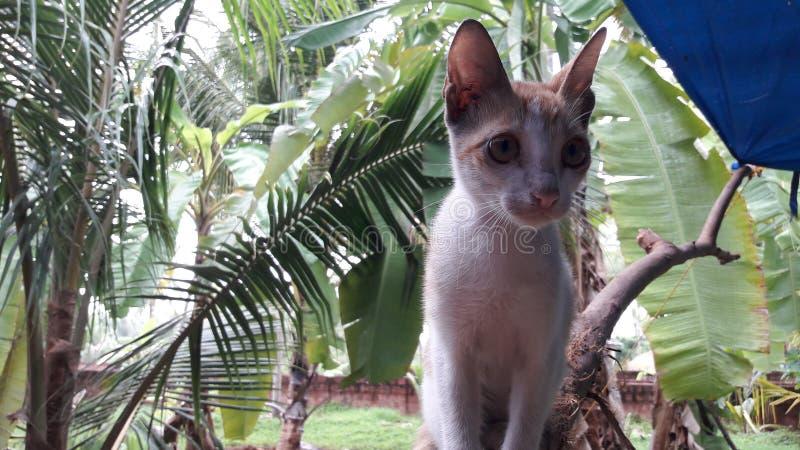 Katt royaltyfri foto