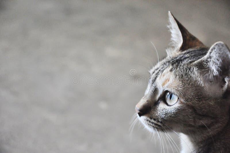 Katt arkivfoto