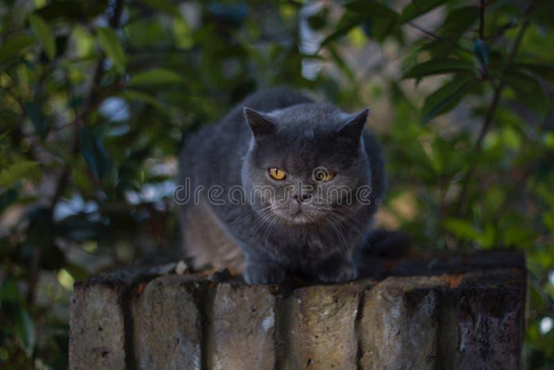 Katt royaltyfria bilder