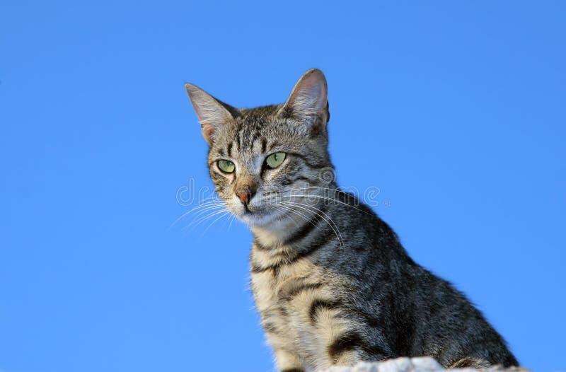 Download Katt fotografering för bildbyråer. Bild av fluffigt, sällan - 997351