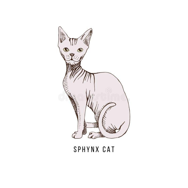 Katt av aveln Sphynx vektor illustrationer