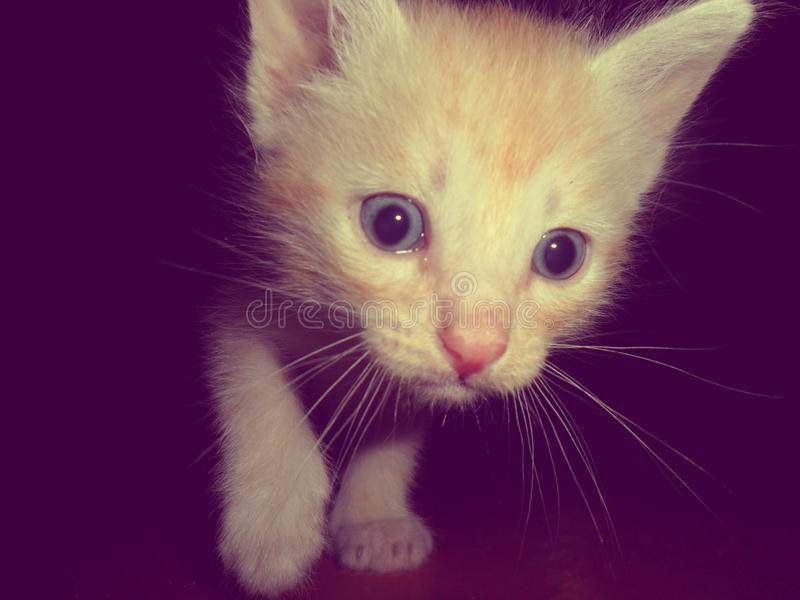 Katt djur katt arkivbild