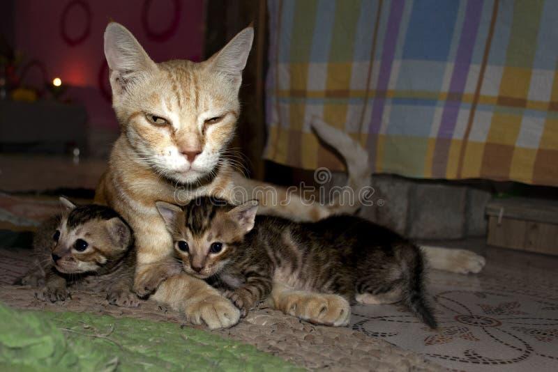 Katt ett guld- husdjur av hus - 17 arkivbild