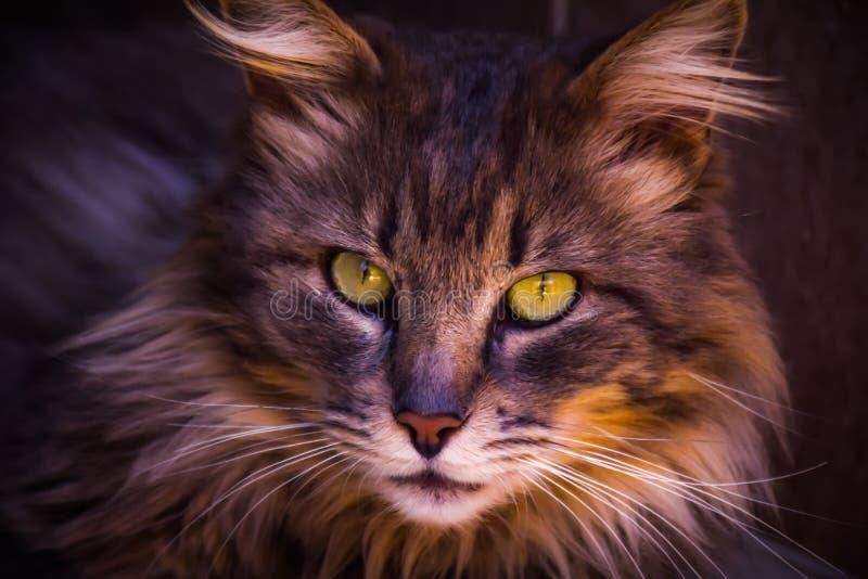 Katt- förälskelse arkivfoton
