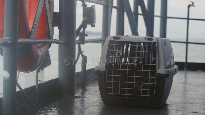 Katt för handelsresandeMaine tvättbjörn i bur som svävar på ett skepp i havet royaltyfri fotografi