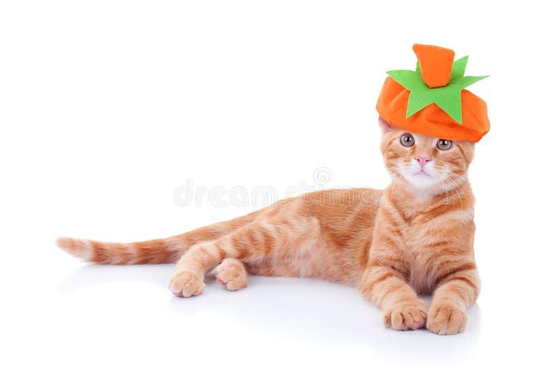 Katt för tacksägelseallhelgonaaftonpumpa arkivbild