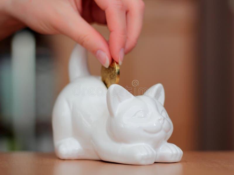 Katt-formad encentmyntbank arkivbild