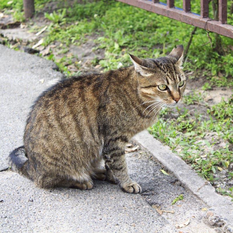 Katt gata, stående, sten, gulligt som är djur, lögn, strimmig katt som vilar, natur, husdjur som är nätt, framsida som är utomhus royaltyfri fotografi