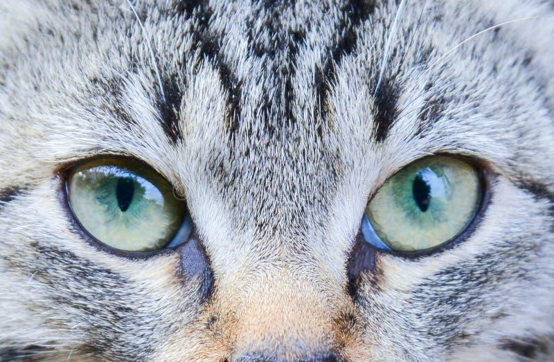 Katt?gon st?nger sig upp Blick av en liten rovdjur arkivfoto