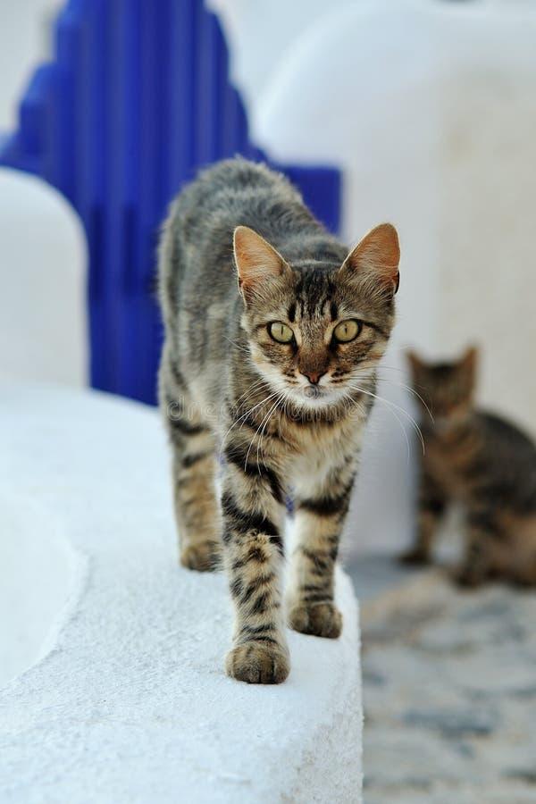 katt greece arkivfoto