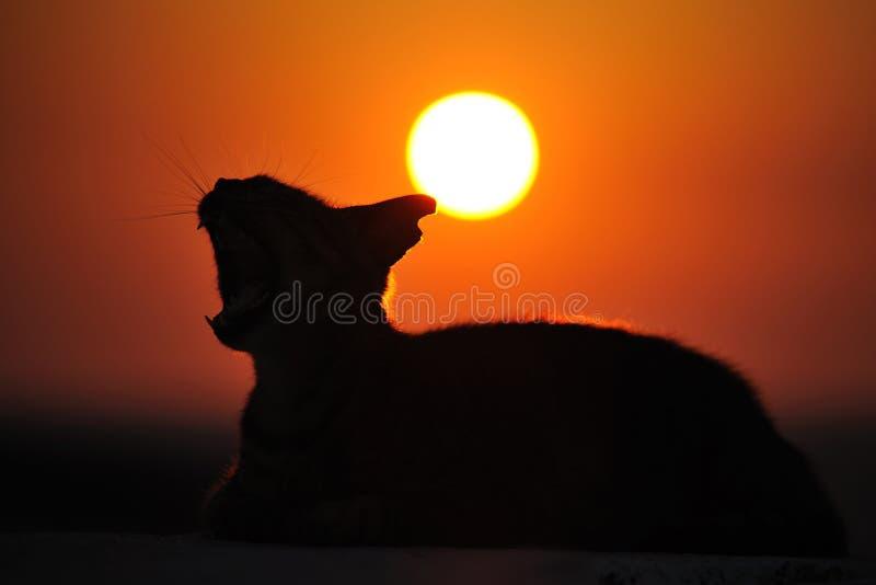 katt greece fotografering för bildbyråer