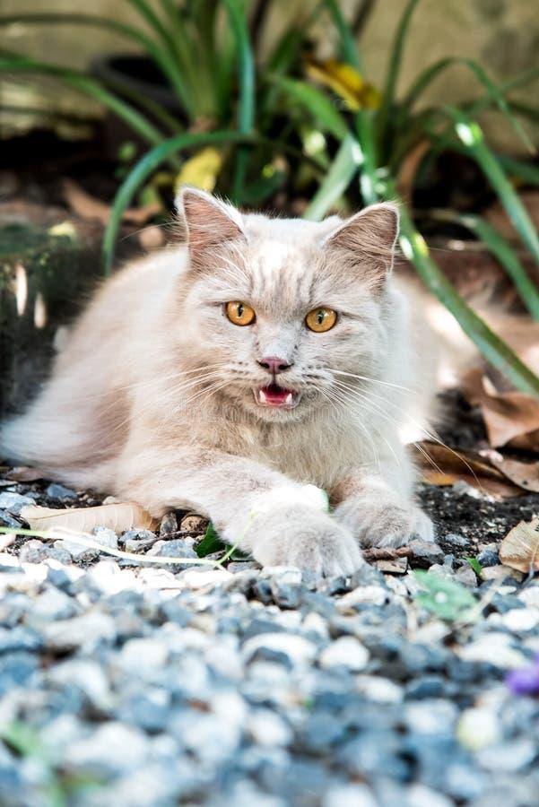 Katt Husdjur och djur arkivbild