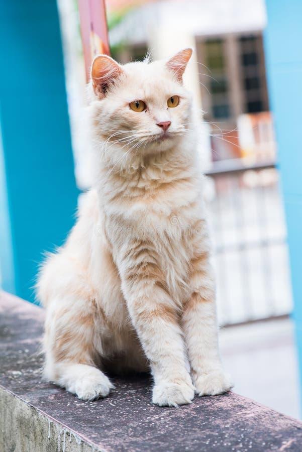 Katt Husdjur och djur arkivbilder