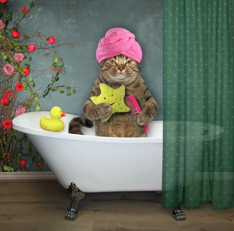 Katt i badrummet 2 royaltyfria bilder