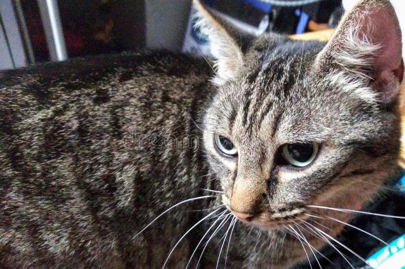 Katt i begrundande royaltyfri fotografi