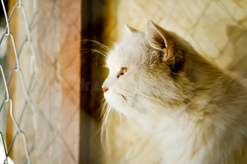 Katt i bur fotografering för bildbyråer